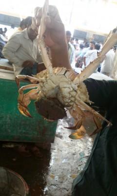 Рыбный базар в Бангладеш - краб.jpg