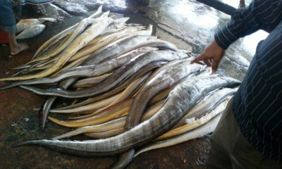 Рыбный базар в Бангладеш - C360_2014-03-05-11-45-03.jpg