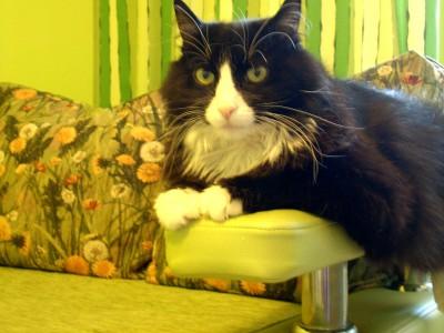 Каким должен быть кухонный диван? - DSCN3954.JPG