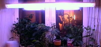 Домашняя установка для выращивания зеленого лука - люминисцентная.jpg