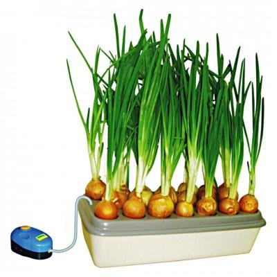 Домашняя установка для выращивания зеленого лука Луковое счастье  - Домашняя установка для выращивания зеленого лука  Луковое счастье.jpg