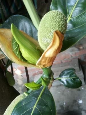 Экзотические овощи и фрукты - CAM00005.jpg